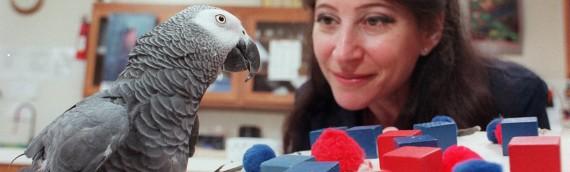 """Audubon.org Asks Dr. Pepperberg, """"Why Do Parrots Talk?"""""""
