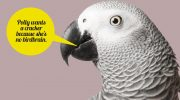 """Dr. Pepperberg Interviewed for The Boston Globe: """"10 ways animals are smarter than you think"""""""