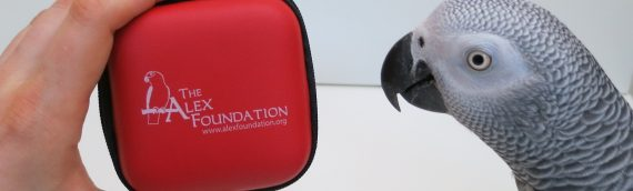 NEW! The Alex Foundation Tech Charging Kit