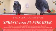 Spring 2021 Fundraiser Begins Today!